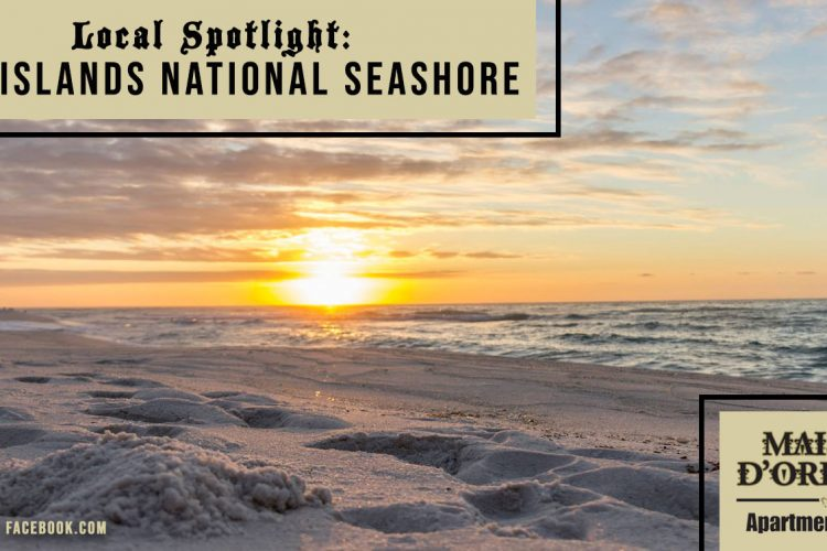 Local Spotlight: Gulf Islands National Seashore